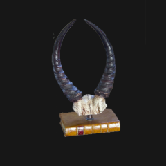 Reedbuck Horns (faux) On Book