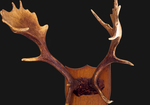 Antler Wall Shields